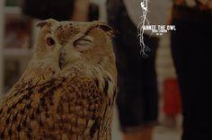 Annie the Owl; London´s first Pop Up Owl Bar