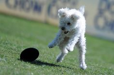Highlights From The Dog Frisbee Championships    http://ffffound.com/image/622ae4f579001a10d880560ee87c68ad42b83139