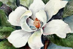 art-magnolia-flower-watercolor-painting-illustration-id485366948 (1024×682)