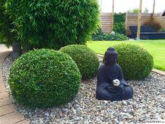 buddha,buxbom,bambu