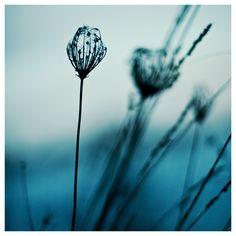 l'hiver en bleu III by quadratiges.deviantart.com on @deviantART