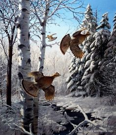 Artist David Maass Unframed Print Wonder Winter Wonder-Ruffed Grouse | WildlifePrints.com