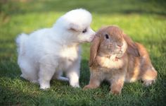 Rabbit,I love u.