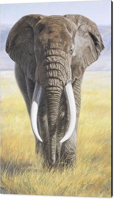 Canvas Art by Lucie Bilodeau is part of Elephant painting Power Of Nature Canvas Print by Lucie Bilodeau All canvas prints are professionally printed, assembled, and shipped within 3 4 business - Wildlife Paintings, Wildlife Art, Animal Paintings, Animal Drawings, Paintings Of Elephants, Elephant Face, African Elephant, African Animals, Elephant Canvas
