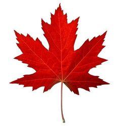 Maple leaf, plakat i gruppen Plakater / Botaniske hos Desenio AB Maple Leaf Images, Red Maple Tree Leaf, Maple Leaves, Fall Leaves Drawing, Maple Leaf Drawing, Canada Leaf, Maple Tree Tattoos, Tattoo Tree, Moldes Halloween