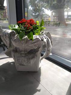 Anna, Plants, Design, Plant, Planets