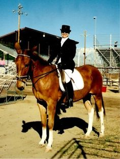 Dressage Mule- Mule's can do anything! Absolutely!