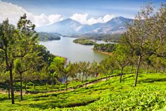 Foto: The breathtakingly beautiful Munnar in Kerala has lush green tea plantations, picturesque towns, various Sanctuaries and National Parks. Honeymoon Destinations On A Budget, Travel Destinations, Travel Tips, Ayurveda, Taxi, Most Romantic Places, Munnar, India Tour, Tourist Places