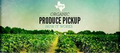 Urban Acres: Co-op Organic Produce--Groupon has a coupon to join a co-op. Excellent way to get seasonal, organic fruits & veggies, faster and cheaper than grocery shopping. #sustainability
