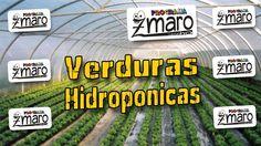 Tudo sobre Verduras Hidroponicas - Zmaro entrevista e desvenda