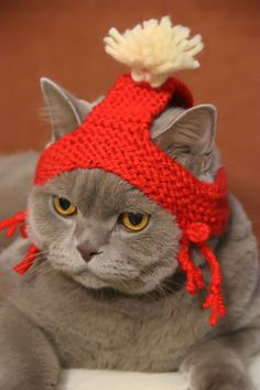 Gettin' ready for Fall…….OH! HOW HE DISLIKES THESE CRAZZZZY HEAD PIECES  HIS MISTRESS KNITS FOR HIM……SHE THINKS HE LOOKS SO CUTE……BOY, IF HE COULD ONLY TALK…………ccp