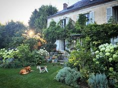 That gentle evening light that does us all so much good #frenchlife #evening #myfrenchcountryhome #gibsonandghetto #roseoclock