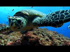 sea turtle :28 If you've never gone scuba diving, it's a must for the bucket list!