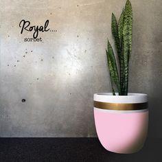 Lightweight plants