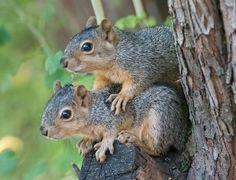 Squirrel Siblings In My Uncle's Yard