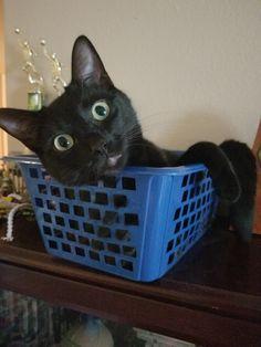 Cooper chillen in his basket
