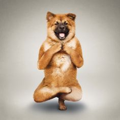 ShockBlast-Yoga-Dogs-1