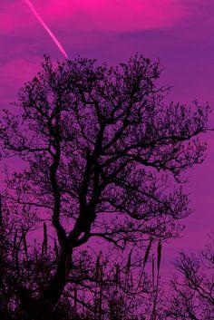 tree, purple sky