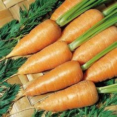 Vegetables to Sow in May
