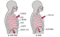 복식호흡과 흉식호흡(횡격막)