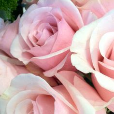 Pink petals in every room