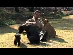 Part of the Pride by Kevin Richardson the Lion Whisperer
