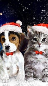 Kot i pies przygotowani na święta