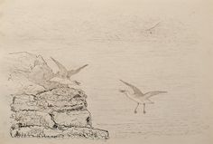 "Squawking Gulls by Charles Murray Adamson (1820-1894) Pen and ink drawing on paper In a cream conservation grade mount (matt) ​In good condition, as illustrated ​Drawing: 17.3 x 25.9 cm (visible); mount: 28 x 35.5 cm (11"" x 14"")"