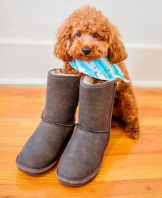#Happyhumpday🐪  Adding a little cheer to your mid-week slump with Fozzie 🐶 in our #BearpawEmma boots ❤️🐻🐾 Shop the Look: https://bearpaw.com/women-s-emma-short (Photo by @fozziesworldfeaturingcrosby) #livelifecomfortably #bearpawstyle