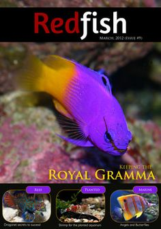 Free subscription    Redfish is a free digital magazine for freshwater and marine fishkeepers.
