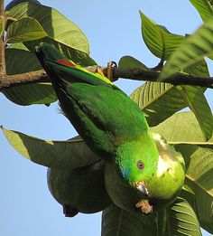 Guava dinner -yummy! by Michael Khor, via Flickr