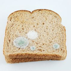 Toast Embroidery #3: Mold 1.   Materials: Toast, thread, paper (structural). 2010. By Judith Klausner.