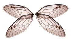 stock-photo-303432-angel-or-insect-wings-large.jpg (380×213)