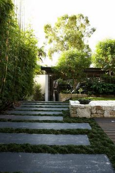 images about mondo grass on Pinterest Grasses