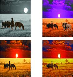 Krislyn Gilbertsen  Digital ART Studio FA2016 SCC Project 2: Dreamscapes Imagery of zebras in Africa