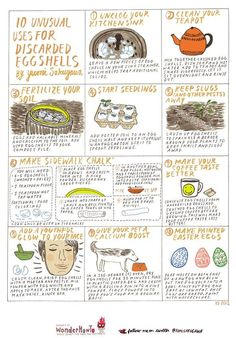 10 Unusual Uses for Discarded Eggshells