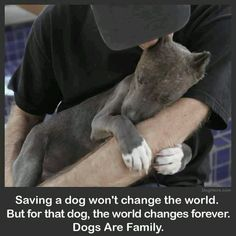 This corny little quote made me think of you even though I HATE the image because it's poorly made/photoshopped. Cute puppy though <3