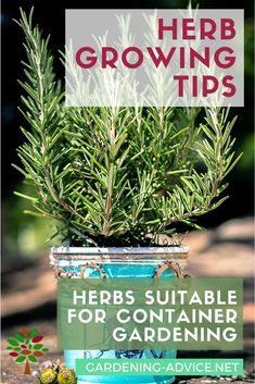 Choosing the right herbs for a Container Herb Garden is critical for success. Here is a selection of culinary herbs that work well for growing herbs in pots. Simple Indoor Herb Garden Designs You Should Try