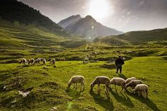 The Shepherd Photo by Rajiv Ranjan Sinha — National Geographic Your Shot