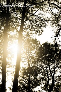 Trees in winter!...Madison Waitman Photography