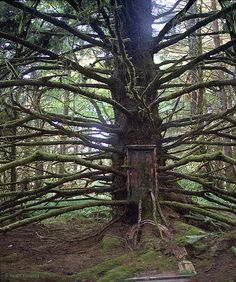 """Maku-Mo-Zo   Elsewhere - I made this digital image a few years ago, from my photographs, for a cd of mine called """"Where."""" The tree was in the redwoods and the doors are from Europe."""