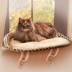 Kitty Sill Deluxe Bolster Cat Bed at PetSmart. Shop all cat window perches online Pretty Cats, Beautiful Cats, Animals Beautiful, Cute Little Animals, Cute Funny Animals, Funny Cats, Cute Cats And Kittens, Cool Cats, Cat Window Perch