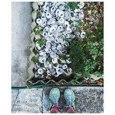 """""""Spotted on my run: a very New Orleans flower bed  #oysters"""""""