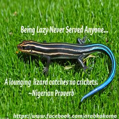 """Being Lazy Never Served Anyone... """"A lounging lizard catches no crickets.  ~Nigerian Proverb"""