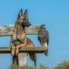 Ingo the Dog and Phönix the Hawk by Tanja Brandt