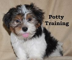 how to potty train a cat fast