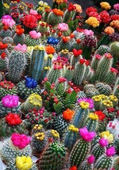 Gorgeous Cacti!