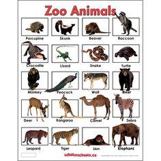 Zoo Animals.