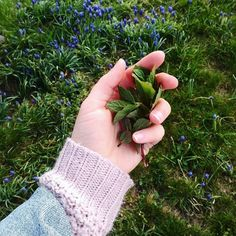farm living and slow living and fresh green and herbs Farms Living, Slow Living, Fresh Green, Fingerless Gloves, Arm Warmers, Mint, Herbs, Fingerless Mitts, Herb