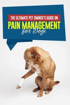 Teaching your dog is all about building your relationship with your dog as well as implementing boundaries. Be firm yet consistent and you'll notice amazing results in your dog training efforts. Meds For Dogs, Cat Medicine, Dog Illnesses, Dog Leg, Guide Dog, Pain Management, Old Dogs, Training Your Dog, Dog Care